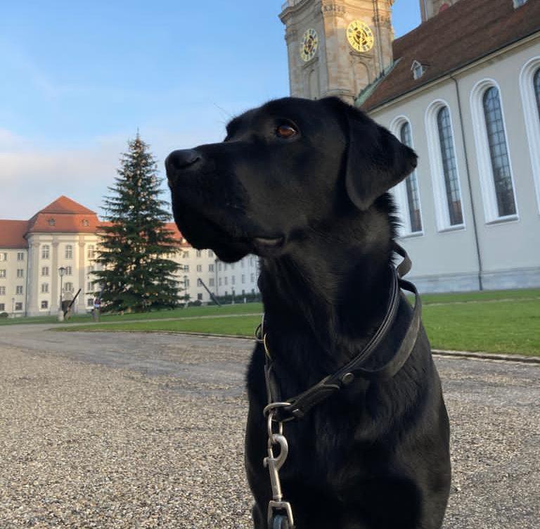 Ein schwarzer Hund vor einem grossen Kirche