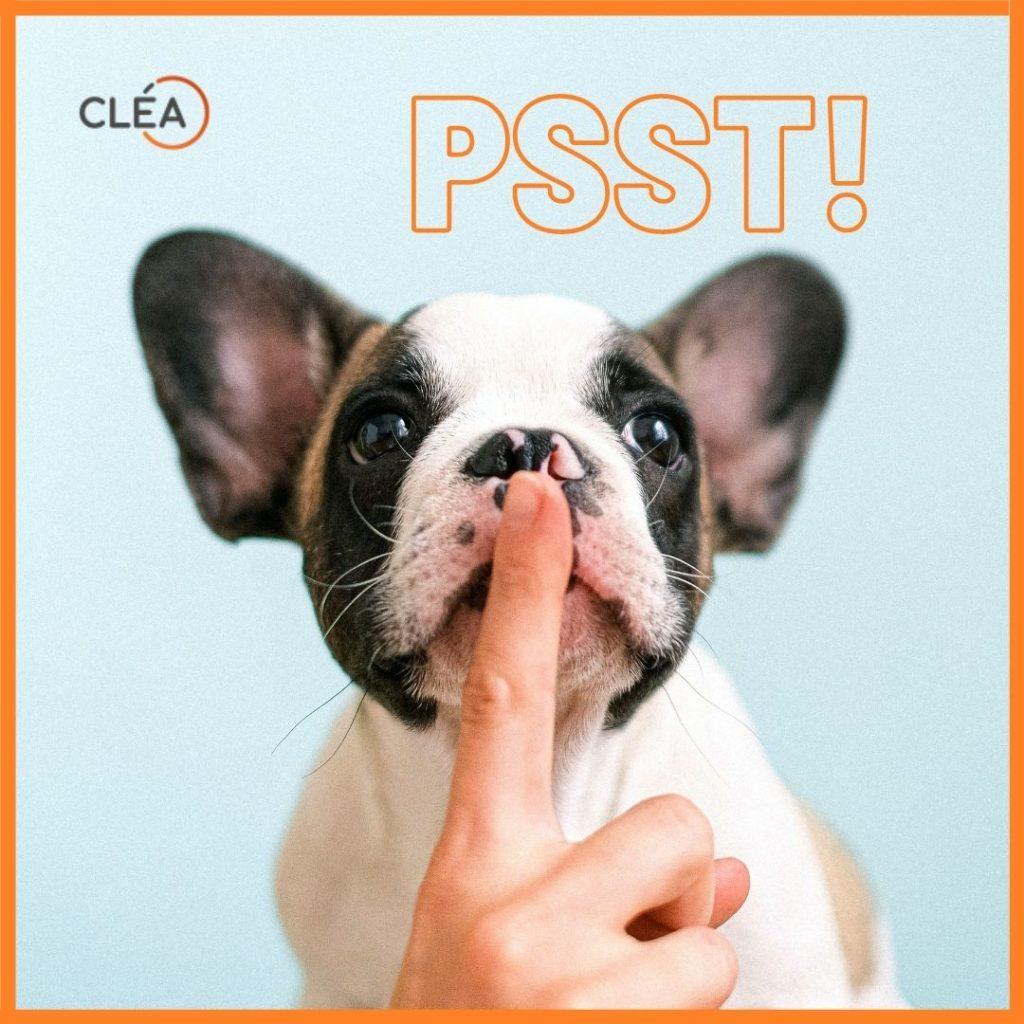 Kleiner Hund mit grossen Ohren, eine Person hält ihm einen Finger vor den Mund zur Geste: Psst.